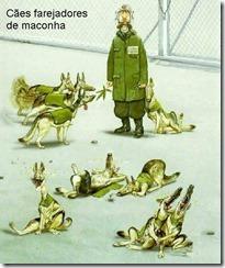 Caes_farejadores_de_maconha11